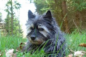 Ce joli petit chien se nomme Pixy. Elle n'est pas morte dans mes souvenirs. 15 ans de PUR BONHEUR.